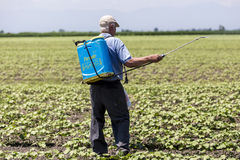 A Farmer spraying cotton field in Greece. Stock Images
