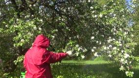 Farmer spraying flowering apple tree stock footage