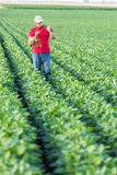 Farmer spraying green soybean plants. Royalty Free Stock Photography