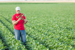 Farmer spraying green soybean plants. Royalty Free Stock Photos
