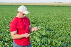 Farmer spraying green soybean plants. Stock Photos