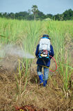 Farmer spraying herbicide on Sugarcane Field. A farmer (also called an agriculturer) is a person engaged in agriculture, raising living organisms for food or raw Royalty Free Stock Photo
