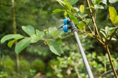 Farmer is spraying insecticide. For plant in garden royalty free stock images