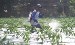 Farmer spraying insecticide Stock Images