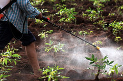 farmer spraying pesticide/chemical fertilizer in the cassava fie Royalty Free Stock Photos