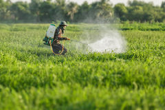 Farmer spraying pesticide. Farmers spraying pesticides in the garden Royalty Free Stock Photo