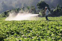 Farmer spraying pesticide on field Royalty Free Stock Photo