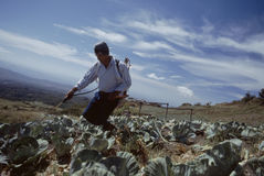 Farmer spraying pesticide Panama royalty free stock photography