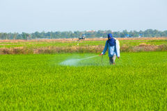 Farmer spraying pesticide Stock Photos