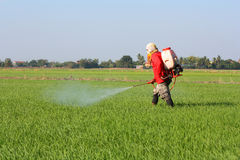 Farmer spraying pesticide. In the rice field royalty free stock photos