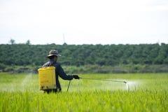 Farmer. Spraying pesticide on rice field stock photos