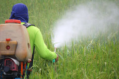 Farmer spraying pesticide in the rice field Stock Image