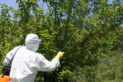 Farmer spraying pesticides or herbicides. In an fruit orchard stock images