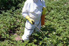 Pesticide spraying. Farmer spraying pesticides. Non-organic vegetables. Pollution royalty free stock images