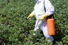 Pesticide spraying. Farmer spraying pesticides. Non-organic vegetables. Pollution royalty free stock image
