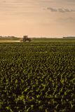 Farmer spraying soybean crops. Agricultural activity stock photography