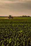 Farmer spraying soybean crops. Agricultural activity royalty free stock photo