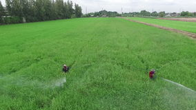 Farmer spraying toxic pesticides or insecticides in agriculture field