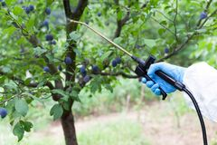 Farmer spraying toxic pesticides or insecticides in an orchard. A farmer in an orchard spraying non-organic fruit with pesticides or insecticides stock photo