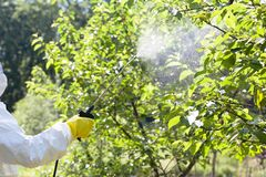 Farmer spraying toxic pesticides or insecticides in an orchard. Pesticides or insecticides spraying. Non-organic fruit stock images