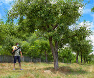 Farmer spraying the trees. With chemicals Stock Images