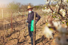 Farmer sprays his vineyard. Stock Images