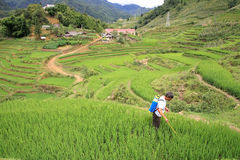 Farmer sprays pesticide on the terraced rice field Stock Photos