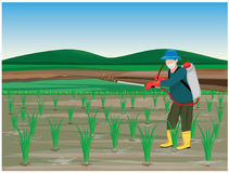 Farmer sprays rice plant. Vector design Royalty Free Stock Photos