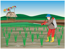 Farmer sprays rice plant. Vector design Stock Image