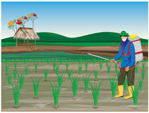 Farmer sprays rice plant. Vector design Royalty Free Stock Image