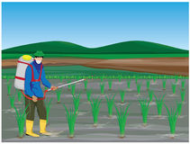 Farmer sprays rice plant. Vector design Stock Photo