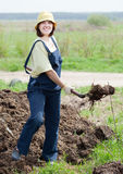 Farmer spreads manure Stock Photo