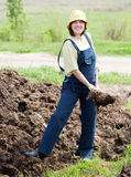 Farmer spreads manure Royalty Free Stock Image