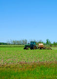 Farmer in Spring Field. Farmer driving tractor on spring green crop under bright blue sky Stock Photo