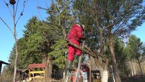 Farmer in spring garden spraying pear-tree stock footage