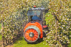 A farmer is sprinkling his blooming orchard Stock Photography