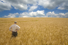 Farmer standing in barley field Royalty Free Stock Photography