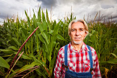Farmer Standing Next To A Corn Field Stock Photo