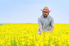 Farmer Standing in Oilseed Rapeseed Cultivated Agricultural Fiel Royalty Free Stock Image