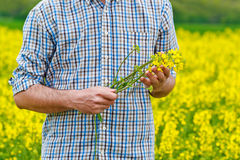 Farmer Standing in Oilseed Rapseed Cultivated Agricultural Field Royalty Free Stock Photo