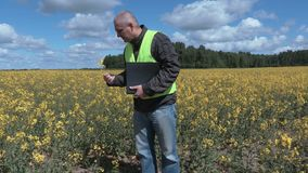Farmer standing in rapeseed field and checking plants. In summer stock video footage