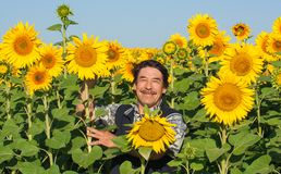 Farmer standing in a sunflower field Stock Photo