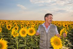 Farmer standing in a sunflower field Royalty Free Stock Images