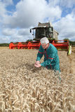 Farmer standing in wheat field Stock Image