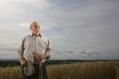 Farmer standing in wheat field Royalty Free Stock Images