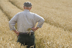 Farmer standing in wheat field Stock Photography