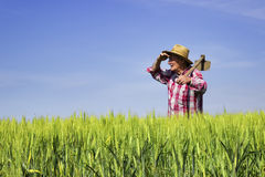 Farmer standing in wheat field and looking across Royalty Free Stock Images