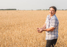 Farmer standing in a wheat field Stock Photography