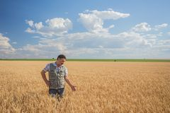 Farmer standing in a wheat field Royalty Free Stock Photo