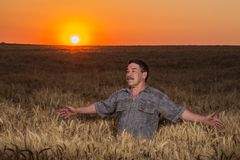 Farmer standing in a wheat field Royalty Free Stock Images